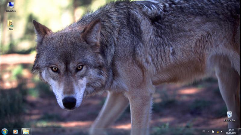 Тема Wolves