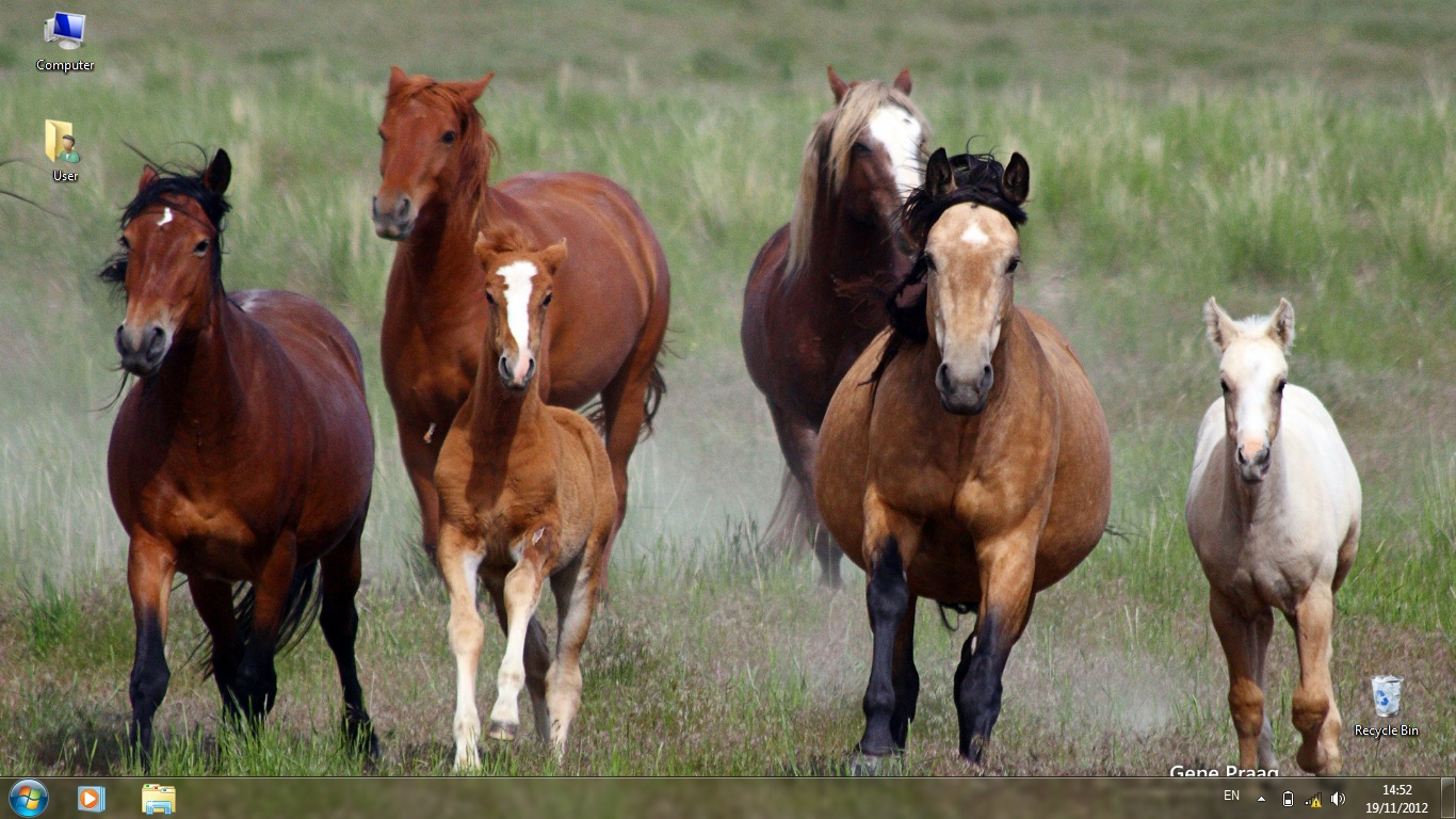 Тема Mustangs