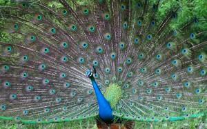 тема Beautiful Birds
