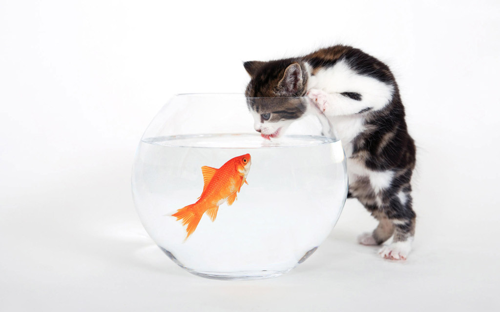 Тема Cat And Fish