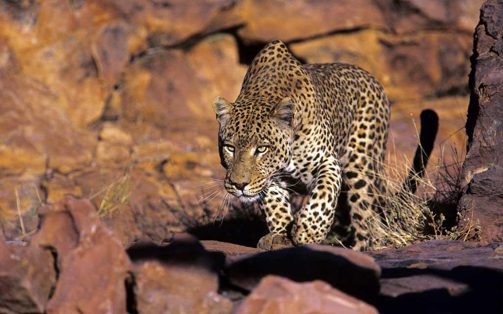 Тема African Wildlife