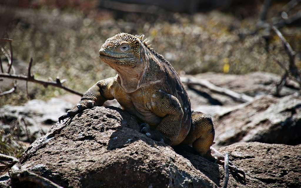 Тема Galapagos