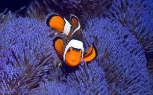 тема Tropical Fish