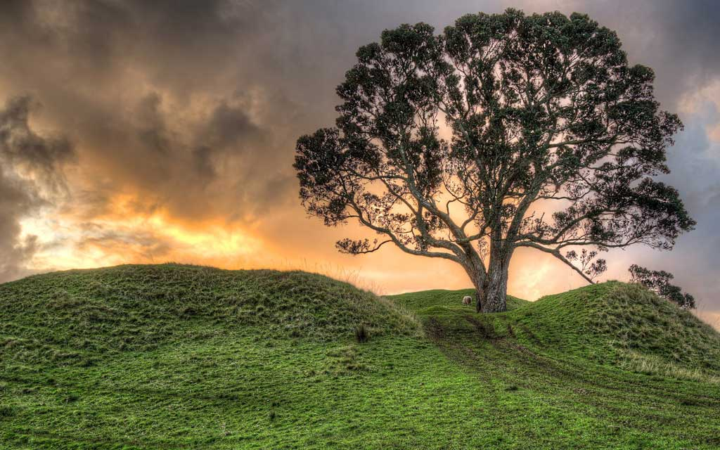 Тема New Zealand Landscapes: One Tree Hill