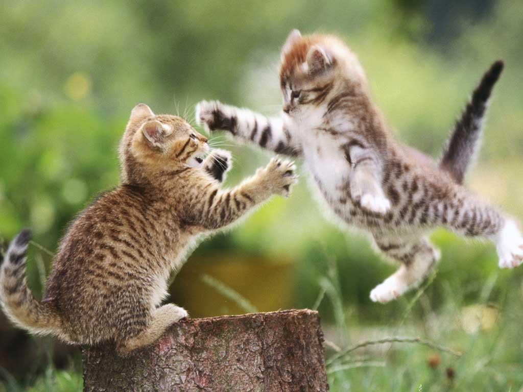 Тема Cats