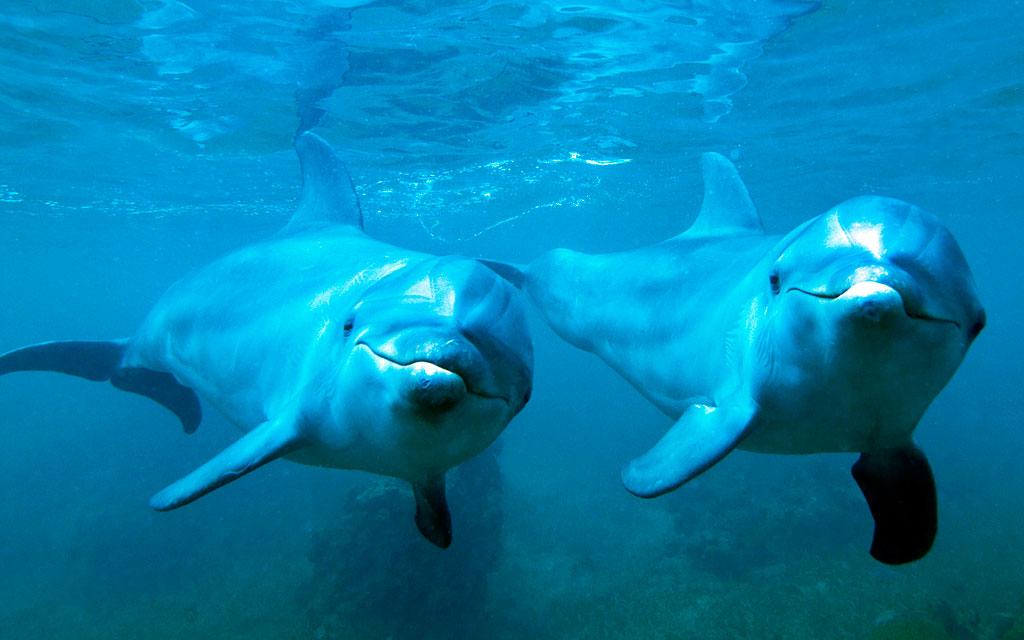 Тема Dolphins