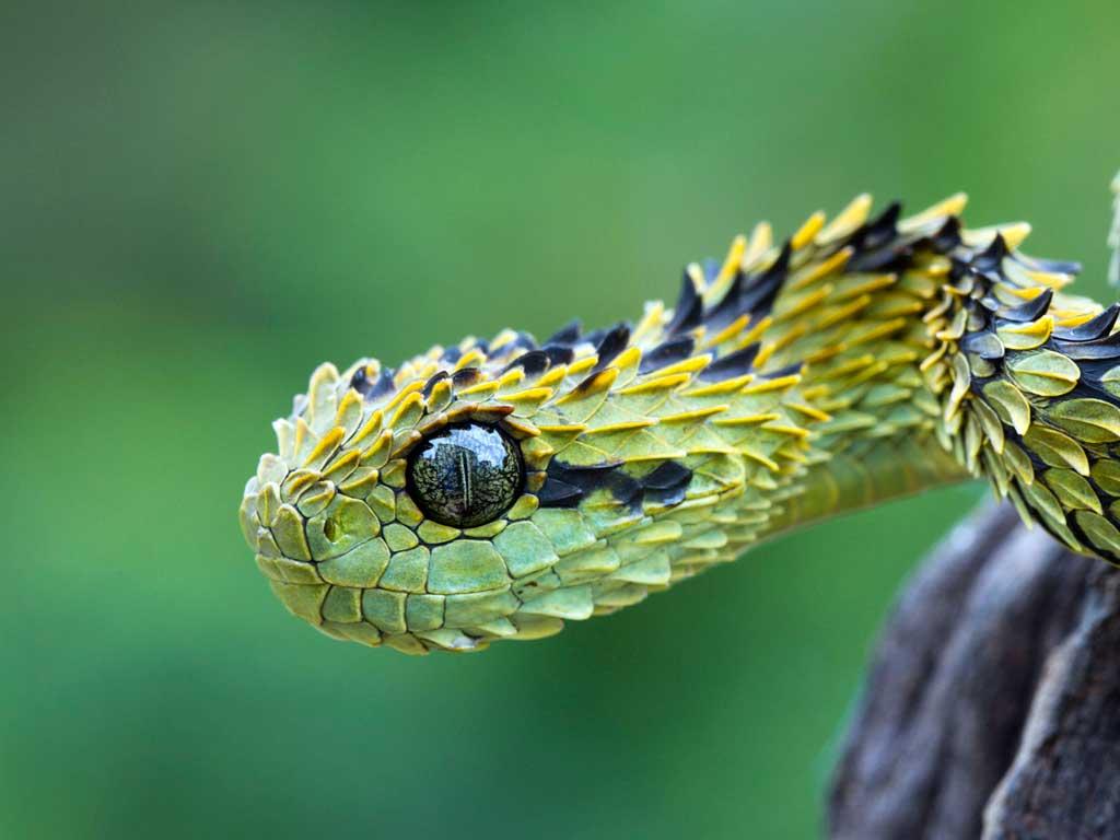 Тема Snakes