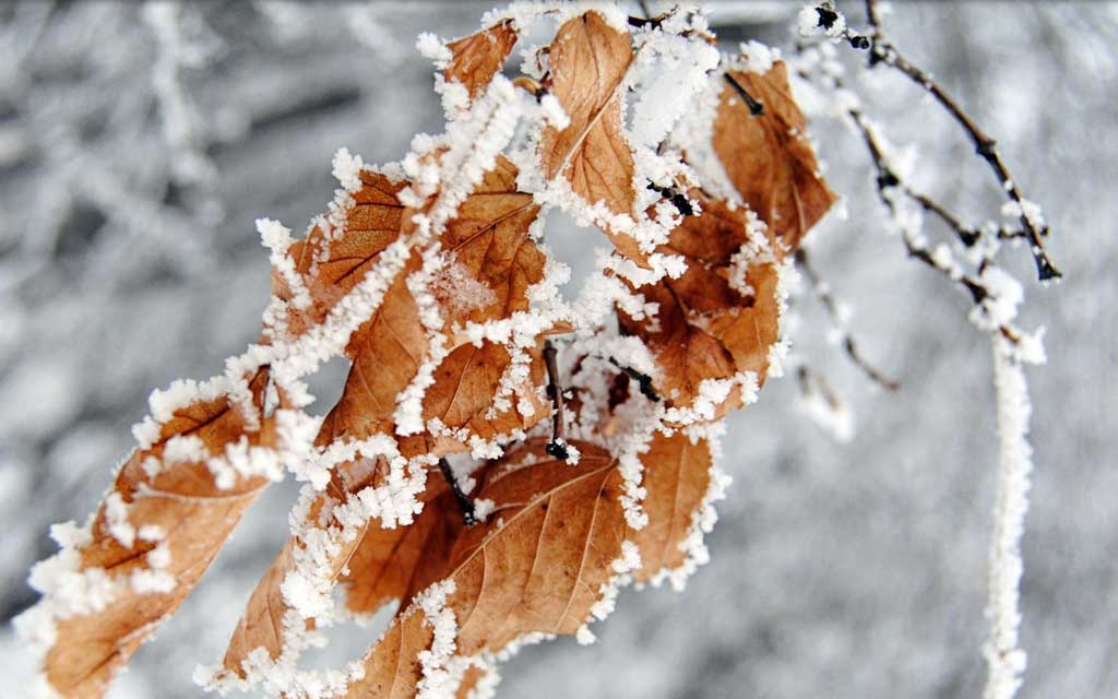 Тема Winter Garden