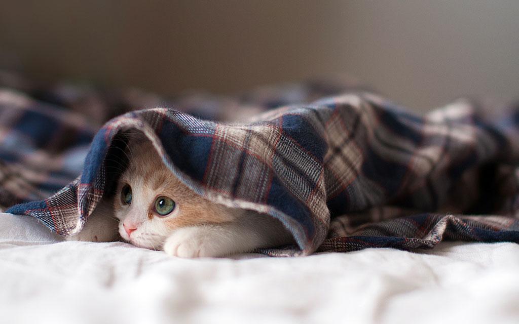 Тема Sleepy Kittens
