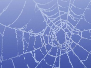 Wintry Webs