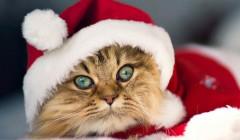 Тема Cute Santa Claus для Windows
