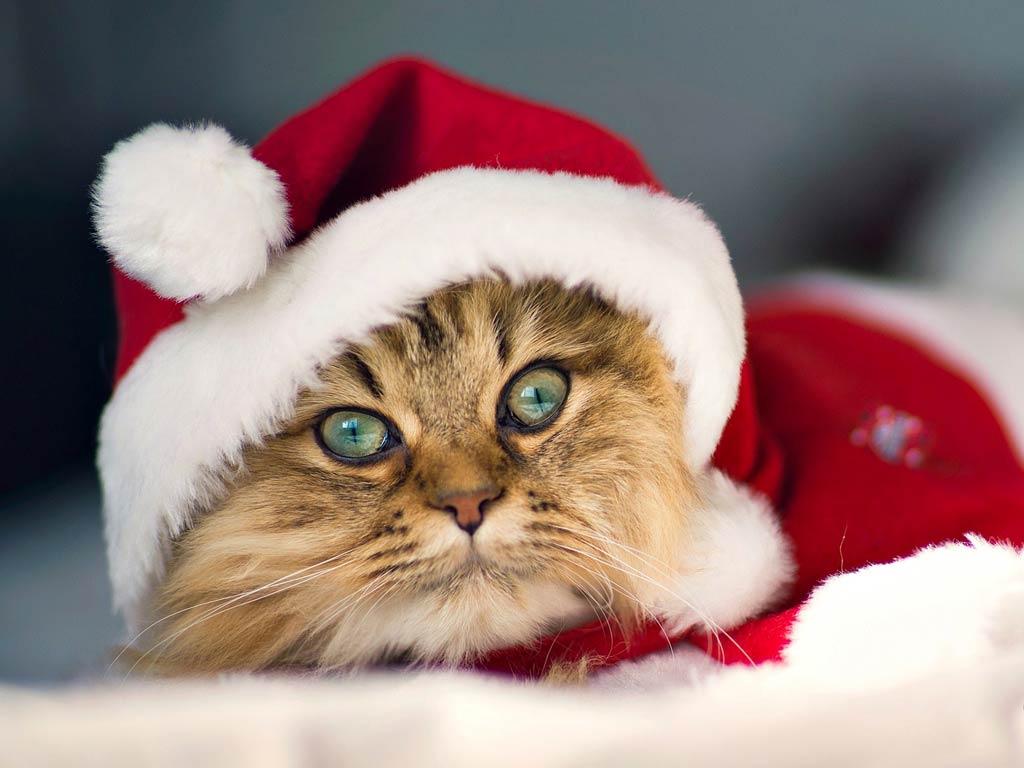 Тема Cute Santa Claus