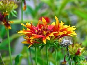Тема garden glimpses 2 от rangan das