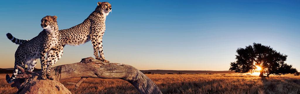 Панорамная тема Animals
